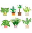 Set of colorful houseplants in pots