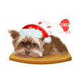 yorkshire terrier dog sitting on a wooden table vector image vector image