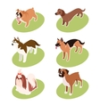 collection isometric dogs vector image