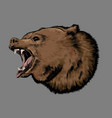 hand drawn sketch of bear in color isolated vector image