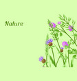 background with herbs and cereal grass vector image