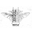 hand drawing and polygonal goliath beetle vector image