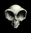 humanoid alien skull on black vector image vector image