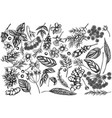 set hand drawn black and white angelica vector image vector image