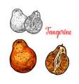 tangerine citrus fruit sketch of mandarin orange vector image vector image