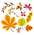 autumn floral set with leaves of oak leaves maple vector image