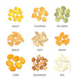 bean and grains seasonal plant seed icons vector image vector image