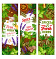 seasoning and condiments herbs and spices vector image