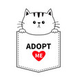 cute cat in pocket holding hands paws adopt vector image vector image