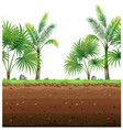 seamless background with palm trees and vector image vector image