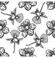 seamless pattern with black and white hypericum vector image vector image
