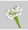 Bouquet of snowdrops vector image vector image