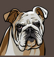 dog bulldog vector image
