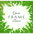 Fresh green leaves frame vector image vector image