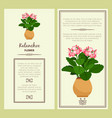 kalanchoe flower in pot banners vector image vector image