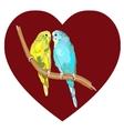 Pair of lovebirds agapornis-fischeri vector image