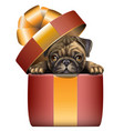 a pug looks out a gift box wall sticker vector image