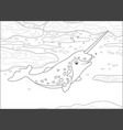 arctic narwhal vector image vector image