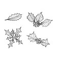 hand drawn set of christmas holly twig vector image