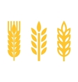 yellow wheat ear spica icons set vector image vector image