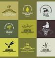 olive oil labels set vector image