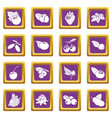 berries icons set purple square vector image vector image