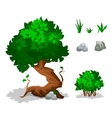 green plants Trees bushes grass and stone vector image vector image