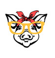 pig head in bandana and sunglasses farm animal vector image vector image