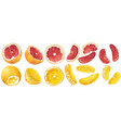 set with fruits and fruit parts of grapefruit and vector image