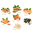 Big collection of ripe nuts vector image vector image