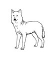 hand drawn wolf black white sketch vector image vector image