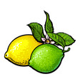whole shiny lime and lemon with fresh green leaf vector image