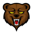 angry bear sign vector image vector image