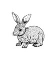 hand drawn rabbit black white sketch vector image vector image