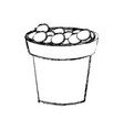 plant pot with stones vector image