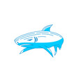 shark logo character design isolated modern vector image vector image