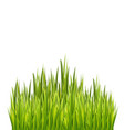 fresh green grass border isolated on white vector image