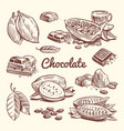 hand drawn cacao leaves cocoa seeds sweet vector image vector image