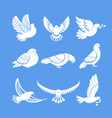 pigeons or white dove birds flying wings vector image vector image