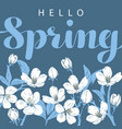 cherry blossom with hello spring lettering on a vector image vector image