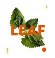 designer element of natural leave herb vector image vector image