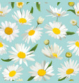 floral seamless pattern with chamomile flowers vector image vector image