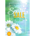 spring sale banner template with daisy flower for vector image