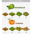 stage of growth vegetables Watermelon and Pumpkin vector image vector image