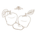 outline hand drawn apple flat style thin line vector image vector image