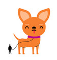 with huge chihuahua dog on a leash and little man vector image