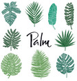 set green palm leaves hand drawing isolated object vector image vector image