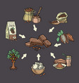 super food chocolate collection for infographic vector image vector image