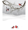 Winter background with birds bullfinch vector image