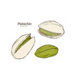 hand drawn pistachios set vector image vector image